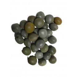 Semillas guacalote ref. 0932